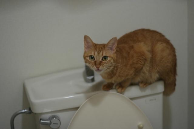 猫のトイレ1日一回?トイレの回数でわかる猫のサイン