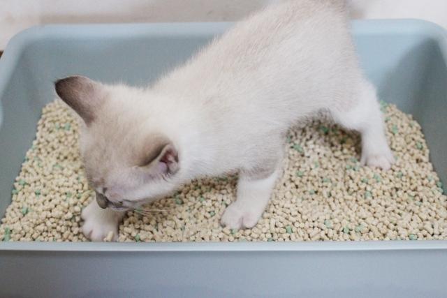 【猫砂】おからの匂いは?素材別のメリット、デメリットを紹介